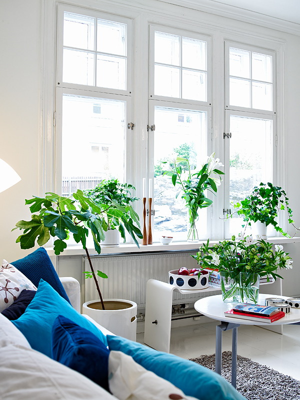 Beautiful plant decoration of a room